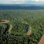 Statsbudsjettet: Skuffende kutt i regnskogsatsingen