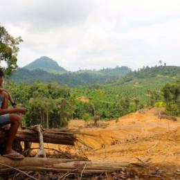 En ung gutt siter og ser ut over et nedhogd skogområde i Indonesia.