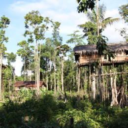 Høye hus i trærne i landsby i Korowai, Vest-Papua, Indonesia
