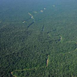 Flyfoto av regnskog med en elv som bukter seg gjennom