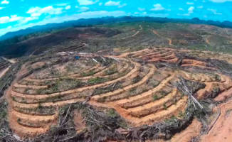 EU timeline for phasing out palm oil in biofuels is disastrous