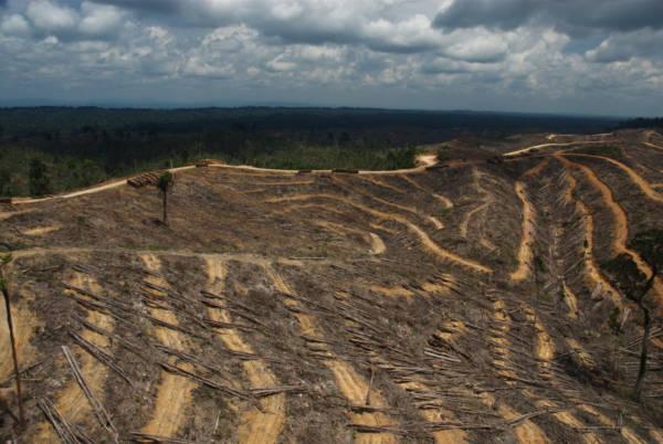 Norway bans palm oil-based biofuel in its public procurement