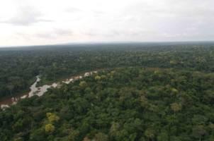 Regnskog så langt øyet kan se. Elva Kongo slynger seg gjennom den tette skogen.