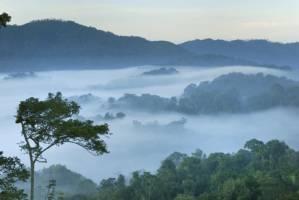 Et teppe av regnskog så langt øyet kan se med et lag av tykk tåke over tretoppene. Et tre er mye høyere enn de andre og står i forgrunnen av bildet.